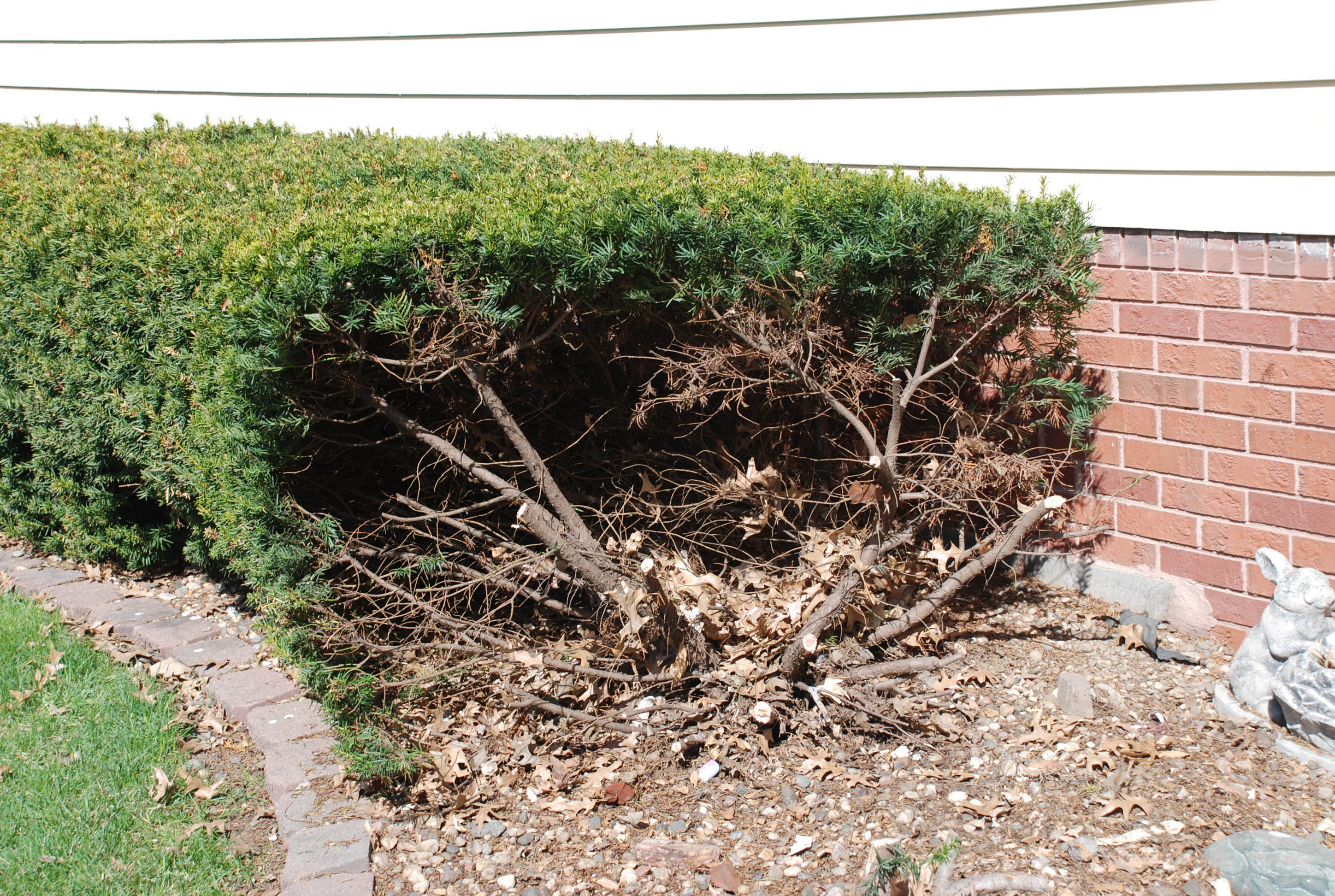 Low maintenance easy grow one cherry tree lane for Easy maintenance bushes